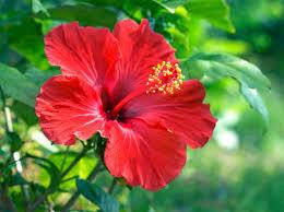 暑い日が続いています。お庭の草花は大丈夫ですか?