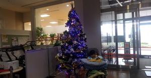 クリスマスツリー発見