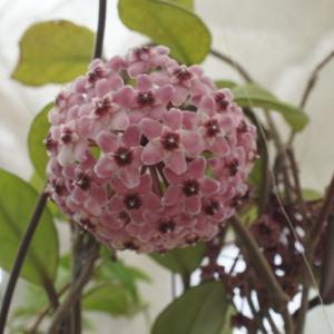 ブログに上げ忘れていた花