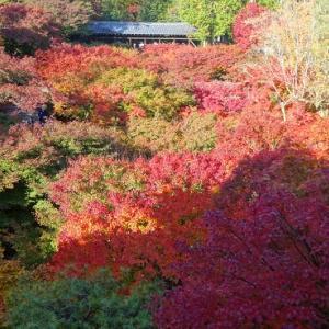 紅葉を観に京都へ