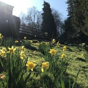 ~My Garden~March.2020