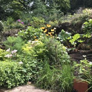 ~My Garden~May.2020☆干し野菜日和の毎日♪