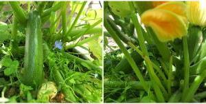 自家栽培の新鮮な野菜でまさかの食中毒!
