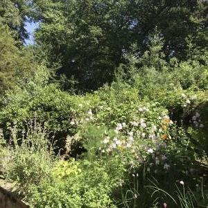 ~Our Garden~June.2021