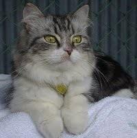今日は、愛猫 きらら の20歳の誕生日です~♪