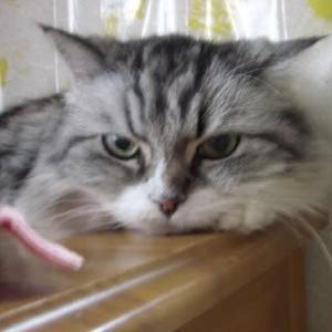 愛猫が調子が悪いです~。お食事前の方、お食事中の方は後でね。
