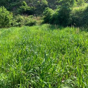 田んぼの畦打ち、ぐるり打ちの思い出