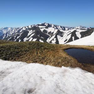 杁差岳登山 残雪とミネザクラ