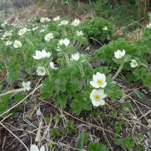 飯豊連峰北俣岳登山で出会った花々 高山植物