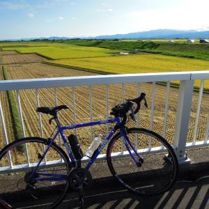 自転車通勤78~80回151Km 稲刈りとフェーン現象