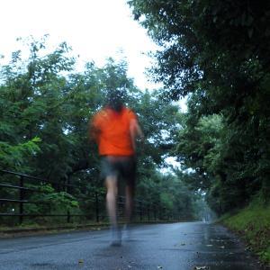 雨のジョギング カワラナデシコとかキクイモとか