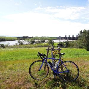 サイクリング108Km アオダイショウ 大河津分水の桜が咲いた