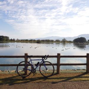 自転車通勤94~97回 202Km 瓢湖のハクチョウ