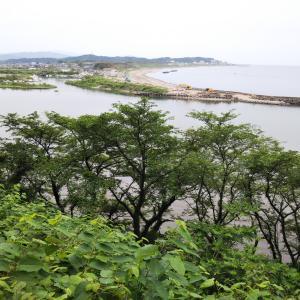 ジョギング 岩ケ崎探検隊 ハハコグサやオオキンケイギク