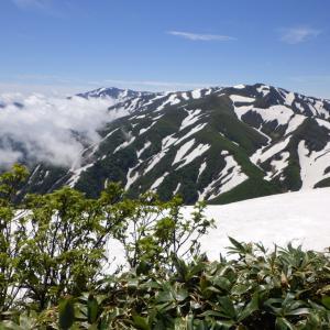 飯豊連峰杁差岳 残雪とハクサンイチゲ