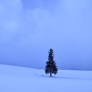 美瑛巡り、冬.....3