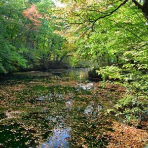 秋模様、鳥沼公園......1