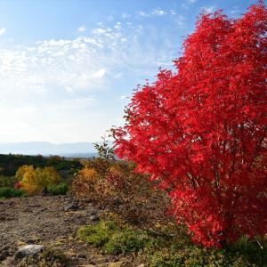 絶景、十勝岳の紅葉........6