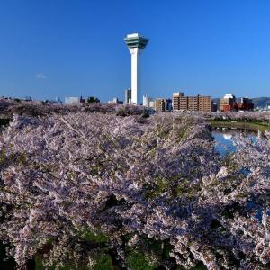 さくら咲く日2021......4