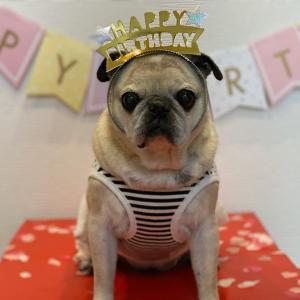 マロたん13歳のお誕生日です。