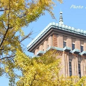 神奈川県庁前の黄葉
