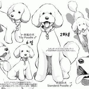 犬のしつけにお役立ち!ドッグトレーナー漫画【DOG SIGNAL】1話一挙46pアップ!