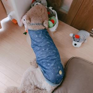 ふしぎ犬ボンボン