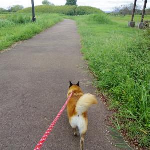 すずさんと近場のおでかけお散歩♪
