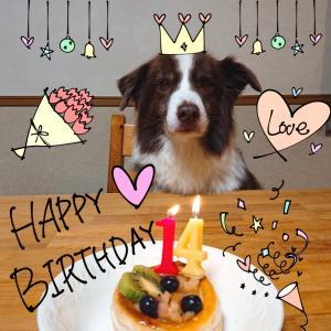 トーイ☆14歳の誕生日