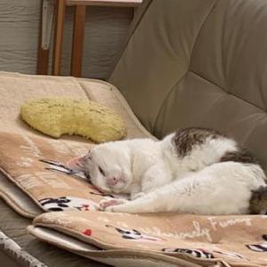 コロナ・ストレスと猫