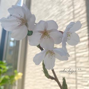 *庭の桜と新作ミニトート*
