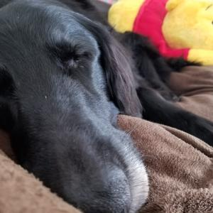 こんな可愛い寝姿なのに。