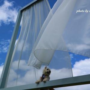 「たくさんの失われた窓のために」大地の芸術祭 ~8月15日~