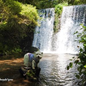千ヶ滝で水遊び ☆ フク家の夏休み第一弾 8月17日