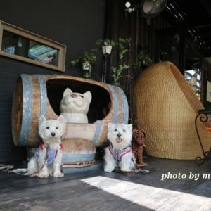 サンカフェ ☆ フク家の夏休み第一弾は突然終わりっ 8月17日