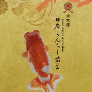 讃岐らんちゅう愛好会研究会優等魚とか。