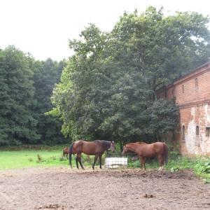ドイツでブラブライド-その3