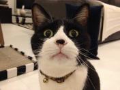 復活一発目はアイザック(猫)動画