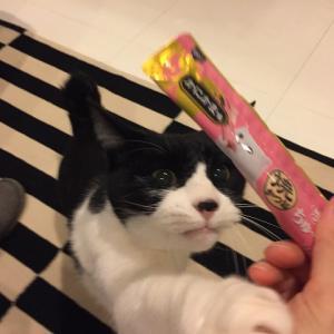 アイちゃん(猫)の誕生日