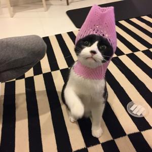 アイちゃん(猫)とフルーツキャップ