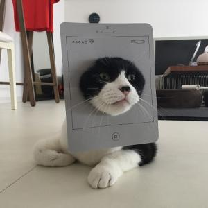 iphone猫アイザック