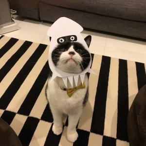 アイちゃん(猫)ゲッソーのコスプレの巻