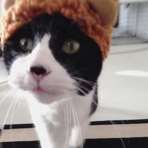 アイちゃん(猫)にねこくまの被り物装着