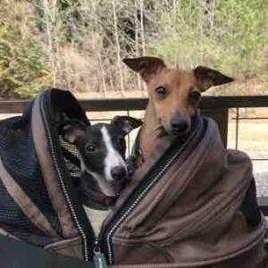 宮跡(旧跡)遊び犬 キアーロ