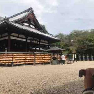 宮跡遊び犬キアーロ 伝飛鳥板蓋宮