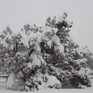 今年初めての大雪