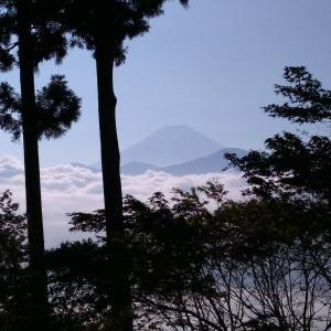 見延山から富士山が見えました、るり玉アザミ開花