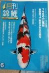 月刊錦鯉6月号