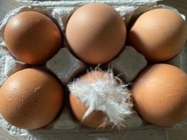 卵は洗って使うよ