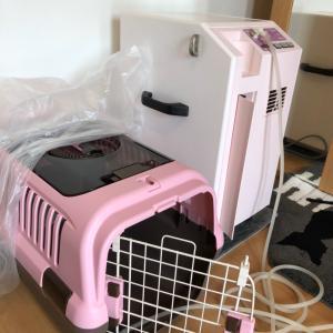 誤嚥性肺炎の仔猫ちゃんに自宅deさんそ設置